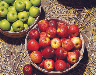 Apple-Picking: Johnson's Corner Farm