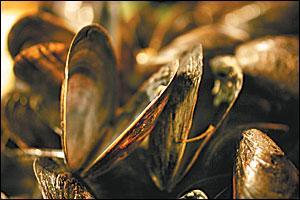 Harvey Cedars