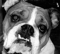 Good Dog Bar Photo Contest