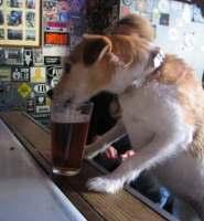 pooch_beer.jpg