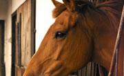 HorseMeatFeatured