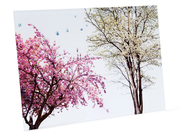 Sarah Zwerling's Pink Tree print