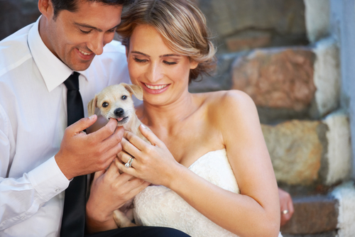 3 Important Tips For Having Your Pet In Your Wedding