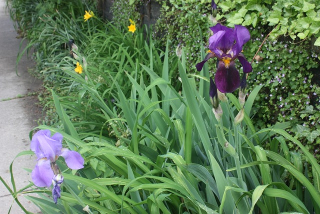 light_and_dark_irises