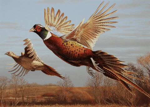 1st place-2011 MN Pheasant Stamp artwork