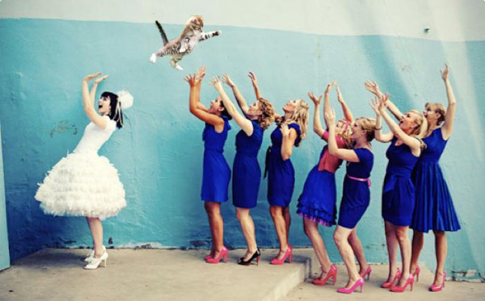 Brides Throwing Cats, your new favorite procrastination destination.