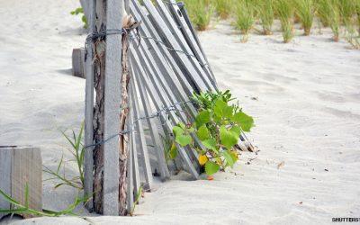 jersey shore sand dunes