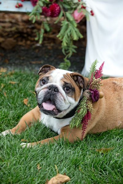 The pup in your wedding needs to wear these flowers, no? Photo by Jorge de la Barra.