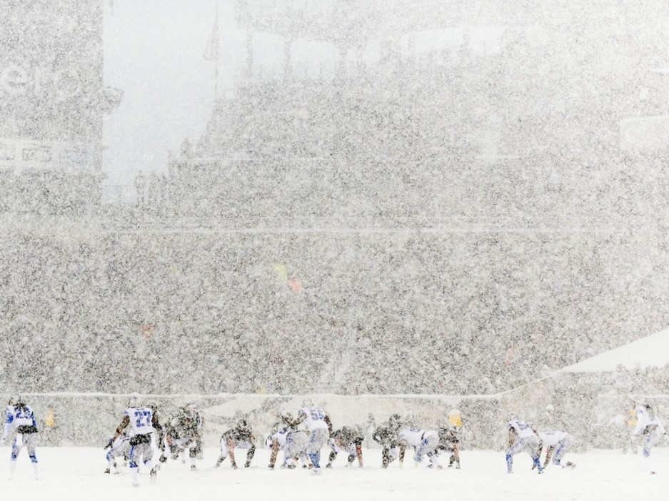 Image result for eagles lions snow