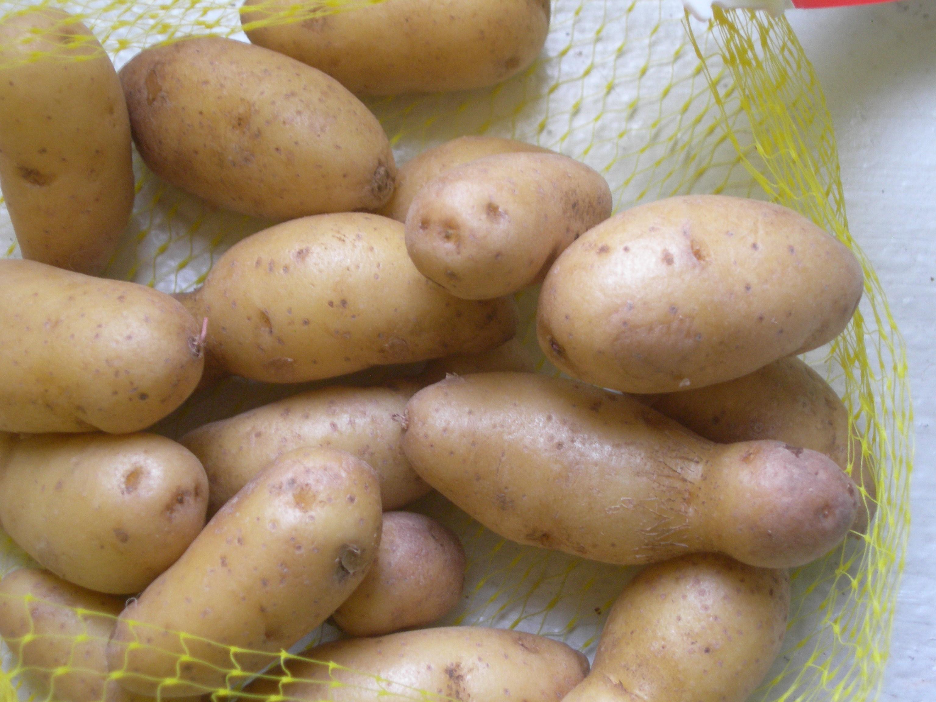 tinypotatoes2