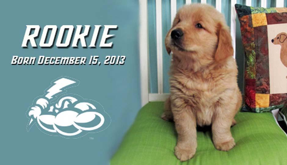 rookie-batdog