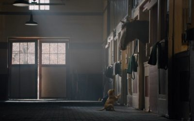 Budweiser puppy love super bowl commercial