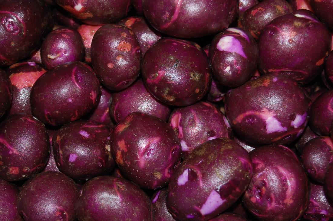 purplevikingpotatoes