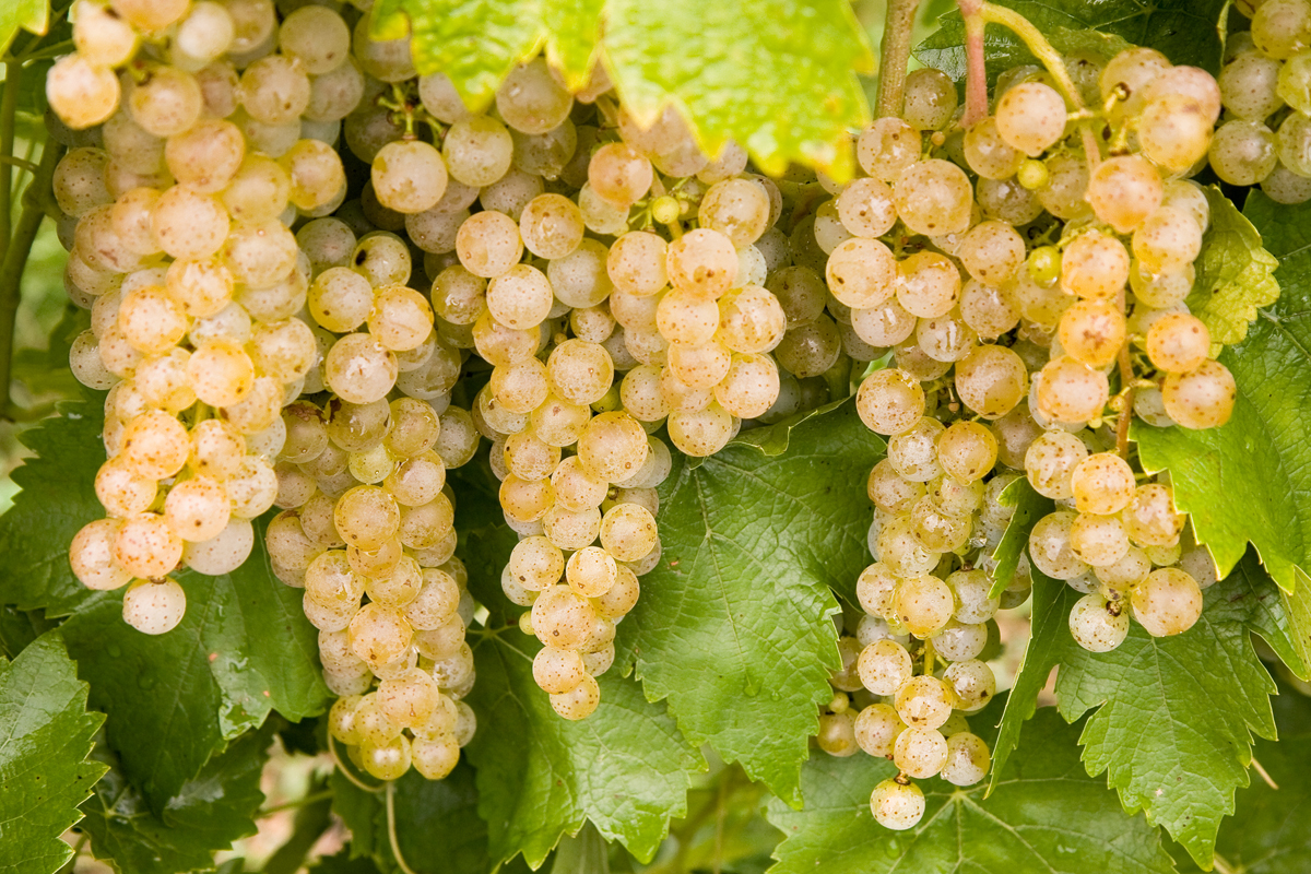 PA Wine blog 7_image