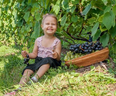 PA Wine blog 8_image