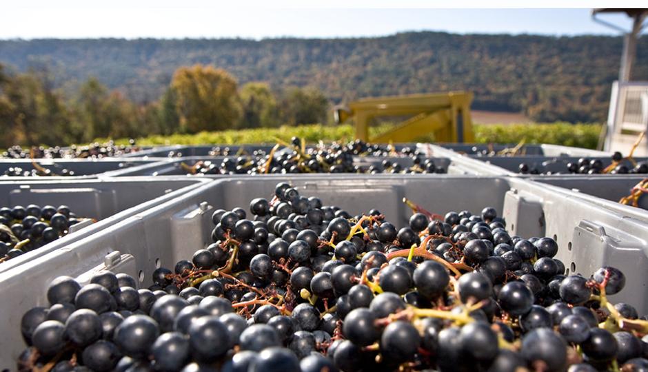 PA Wine Blog 21_image