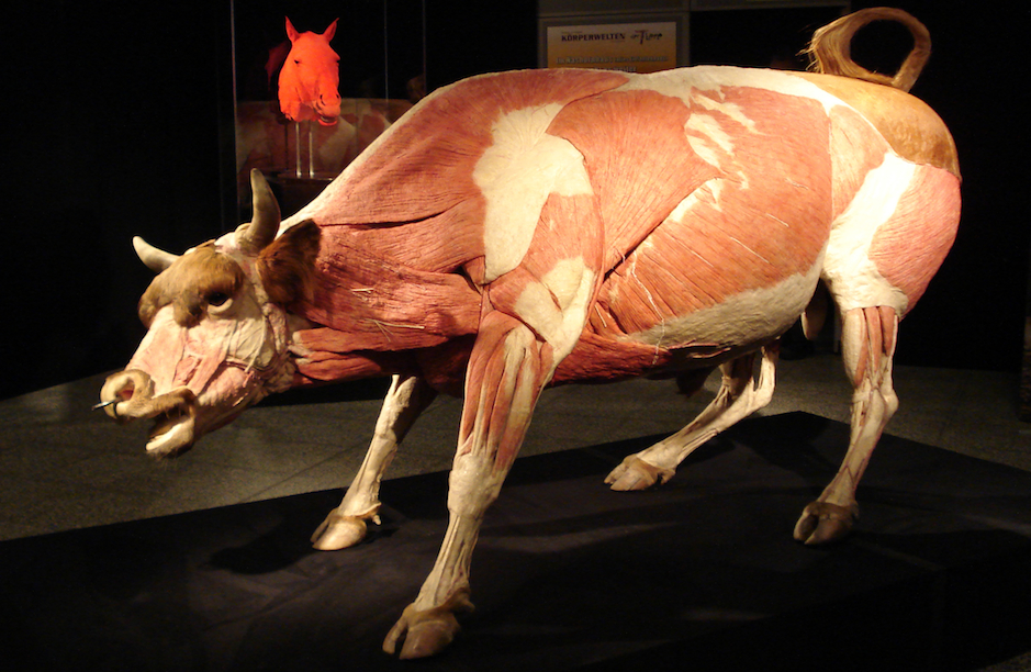 Body Worlds Animals Inside Out At Franklin Institute