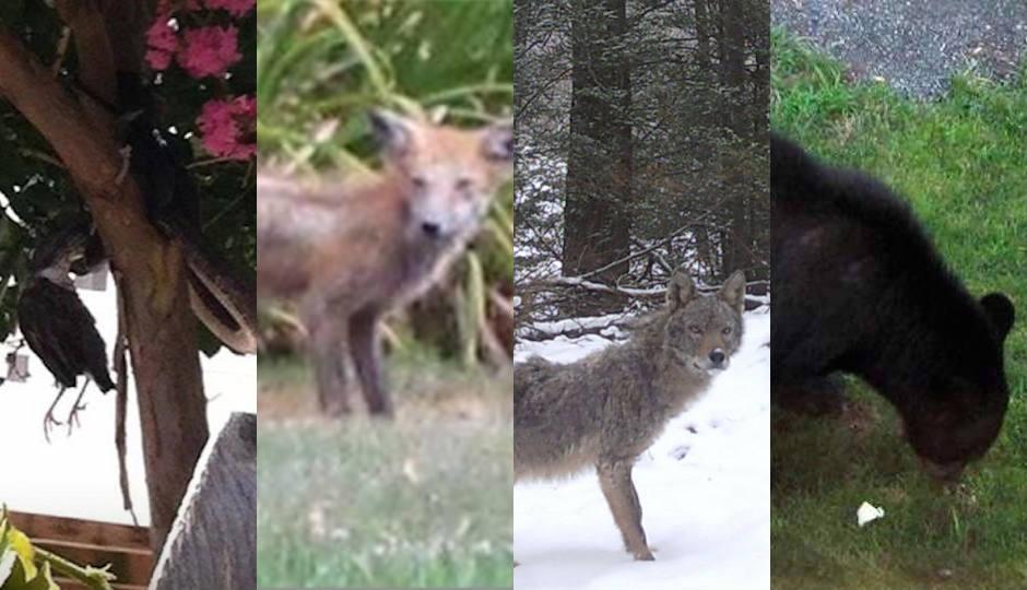 Weird Animals Sightings 4