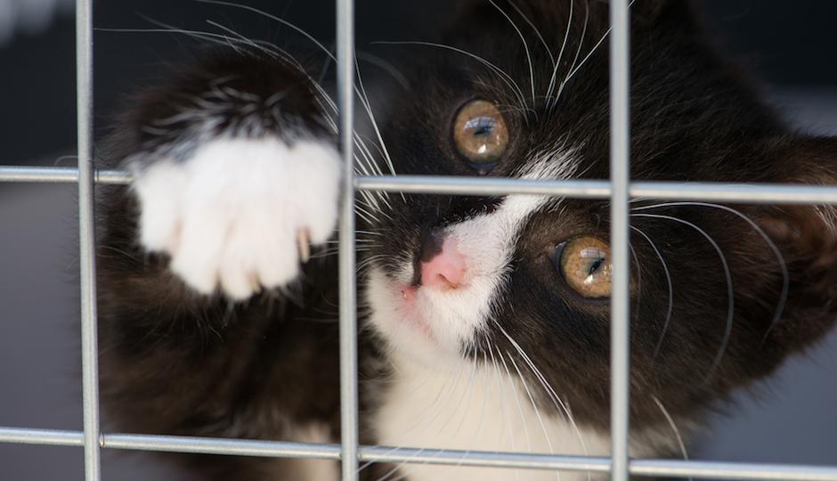 cat.shutterstock.940x540