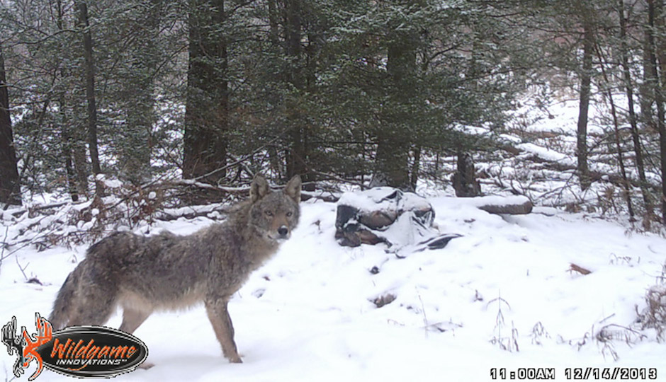 Photo | New Jersey Department of Environmental Protection Division of Fish and Wildlife