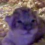 philadelphia zoo lion cub