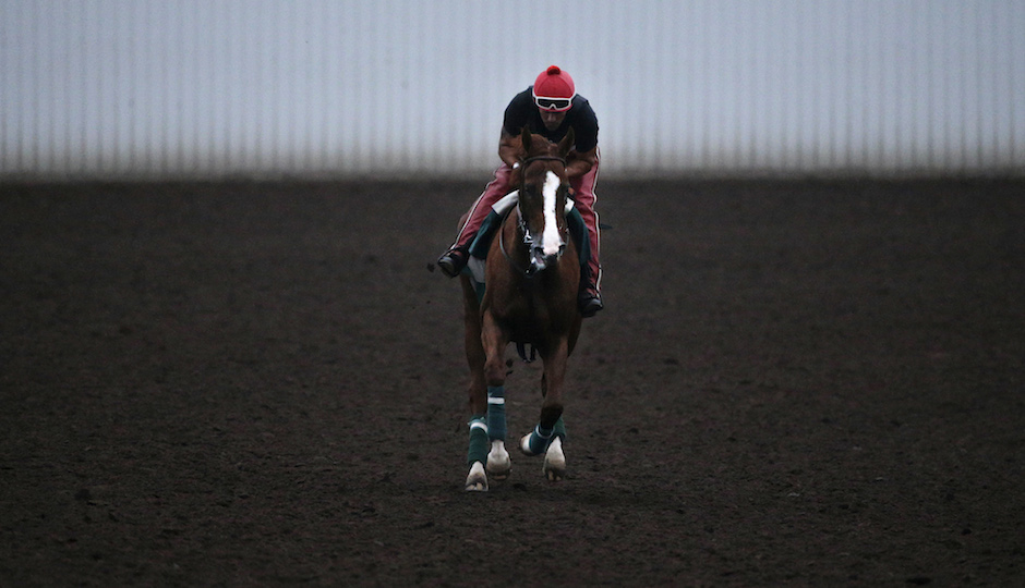 Exercise rider Willie Delgado rides California Chrome along the track during a morning training session at Los Alamitos Race Course Thursday, Sept. 4, 2014, in Los Alamitos, Calif. California Chrome, the Kentucky Derby and Preakness winner, is scheduled to run in the $1 million Pennsylvania Derby on Sept. 20. (AP Photo/Jae C. Hong)