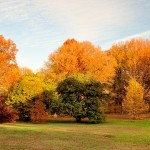 Fall in Tyler Arboretum | Photo by Barry Rubin via Facebook