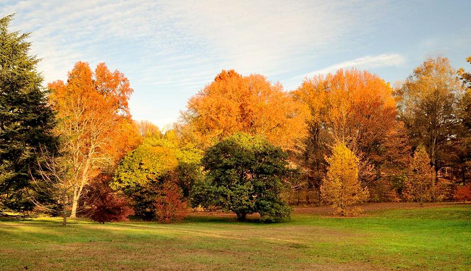 Fall in Tyler Arboretum | Photo by Barry Rubin via Facebook