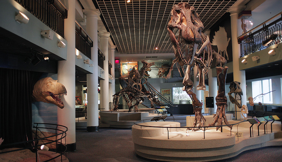 Guests will sleep in Dinosaur Hall during the Academy of Natural Sciences first Overnight for Adults.