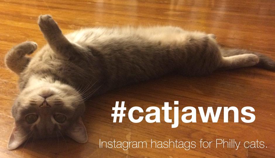 catjawns-instagram