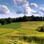 ChesLen Preserve, Photo credit: Simone Collins Landscape Architecture