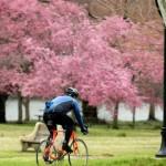 FAIRMOUNT-PARK-KELLY-DRIVE-CYCLIST JEFF FUSCO