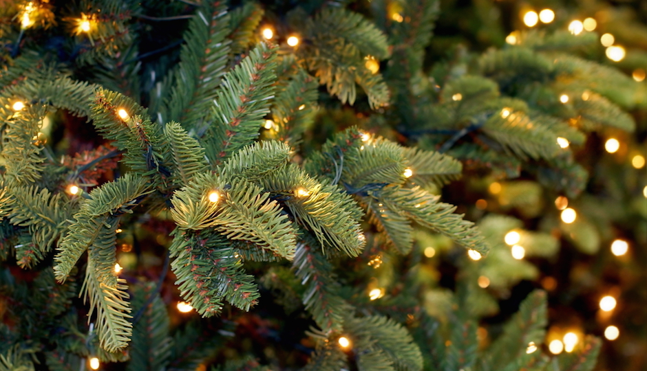 Whole Foods South Street Is Giving Away Free Christmas Trees Today ...