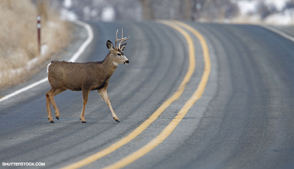 shutterstock_125669744-deer-940x540