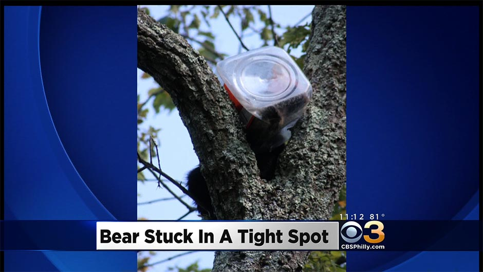 bear-stuck-cbs3 copy