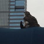 boyds-falcon-2-timothy-haas-940x540