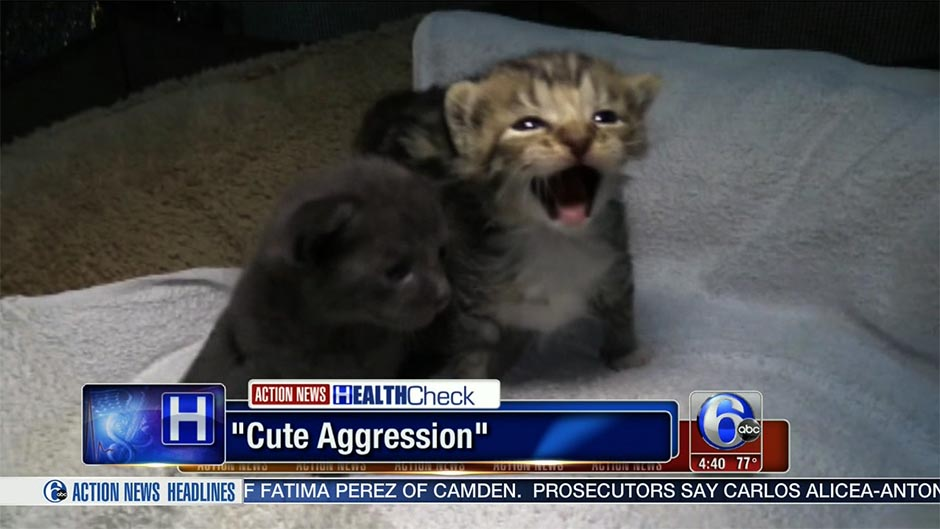 cute-aggression copy