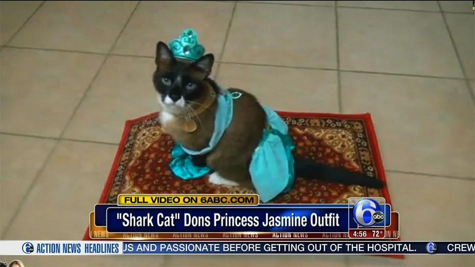 princess-jasmine-cat copy