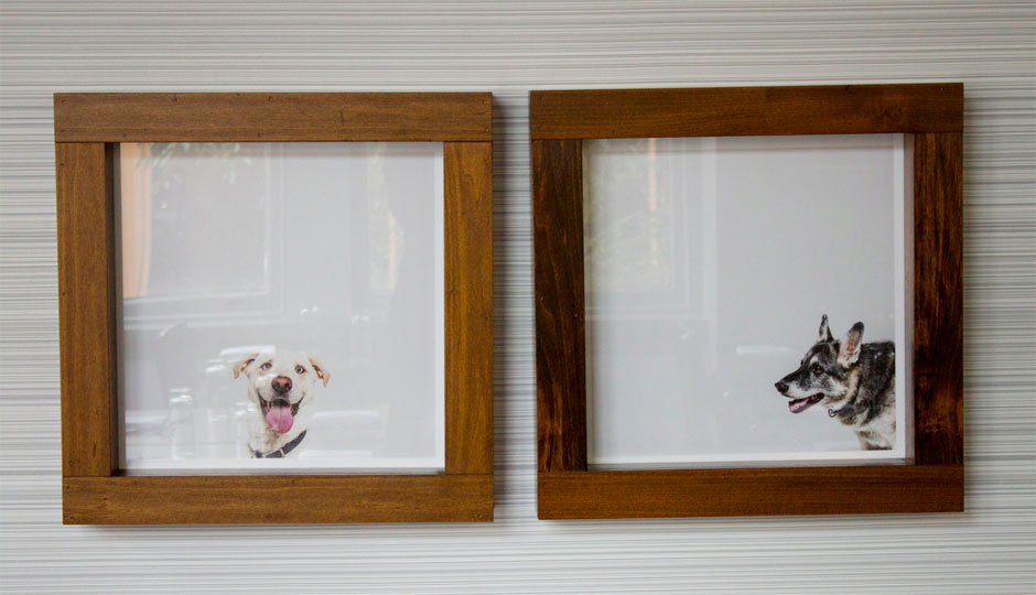 The Sabatinos dogs at Aldine | Photo by  Emily Teel