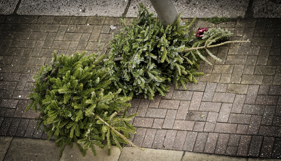 Where to Recycle Your Christmas Tree in Philadelphia - GUIDE: 2015 Christmas Tree Recycling In Philadelphia