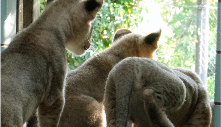 marquee-philadelphia-zoo-lion-cubs