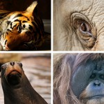 Photos | Shutterstock.com