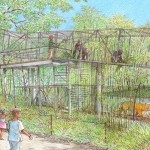 A rendering the upcoming Gorilla Treeway, an extension of the Great Ape Trail.