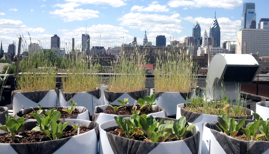 Cloud 9 Rooftop Farm
