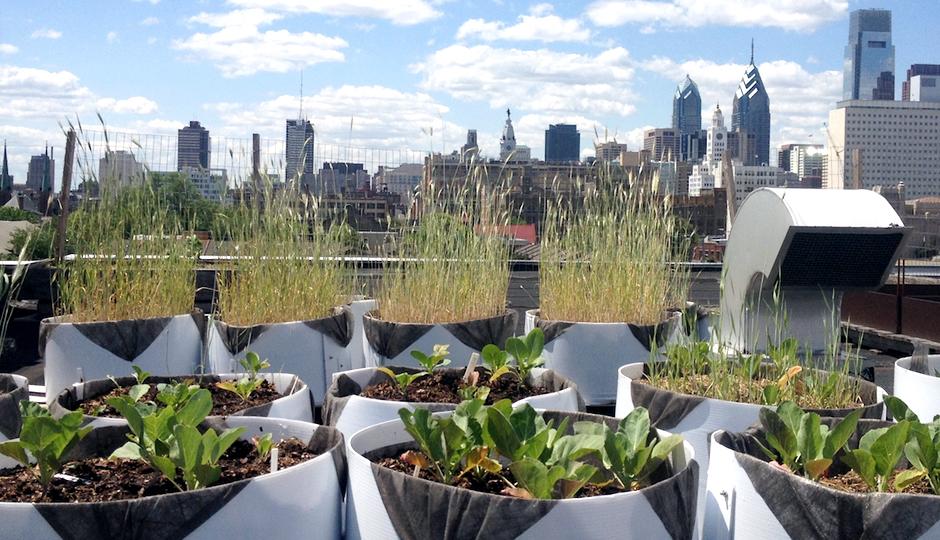 Cloud 9 Rooftop Farm