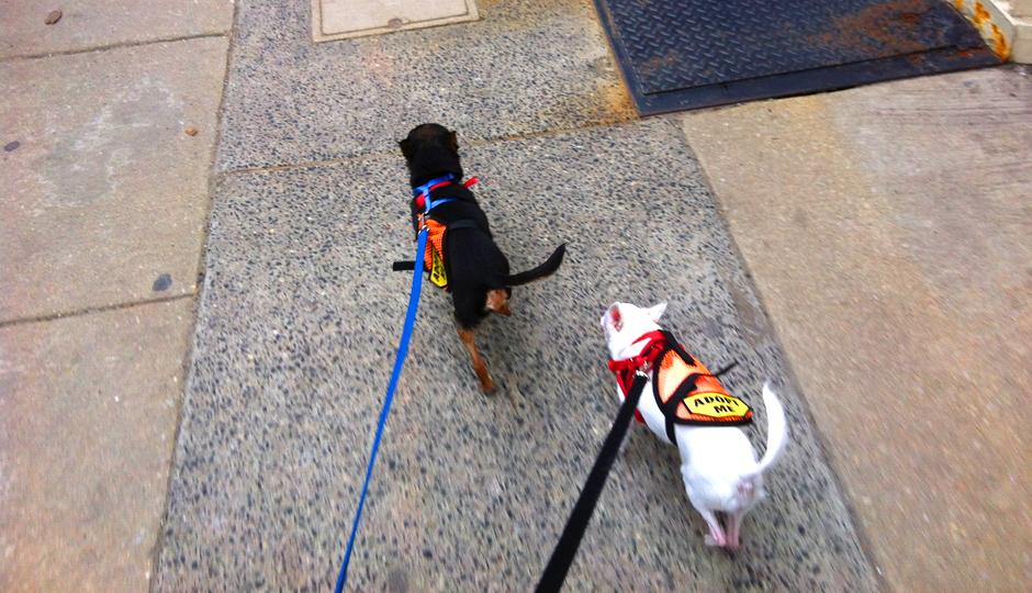 dogs lead