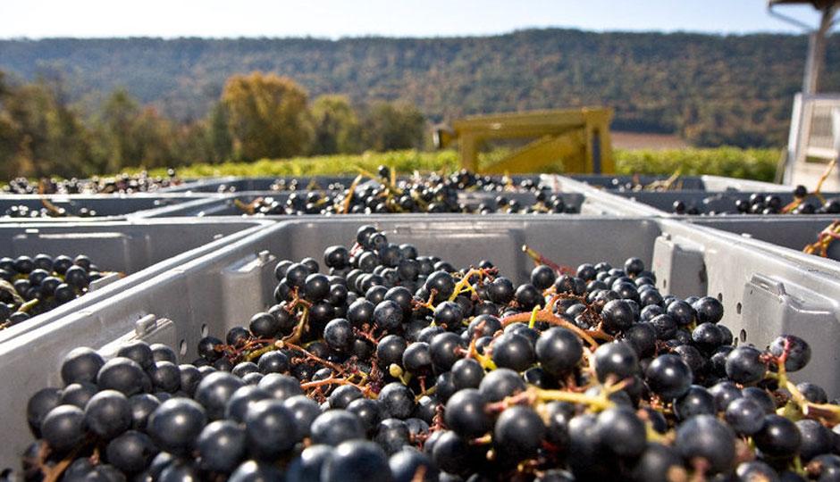 Photo via Pennsylvania Winery Association