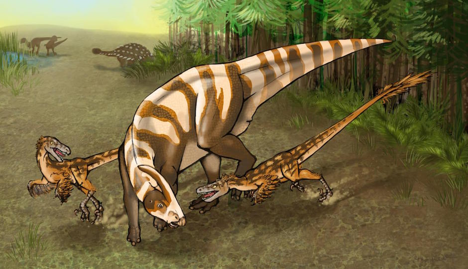 Two Saurornitholestes sullivani raptors attacks a subadult hadrosaur Parasaurolophus tubicen. | Illustration by Mary P. Williams.