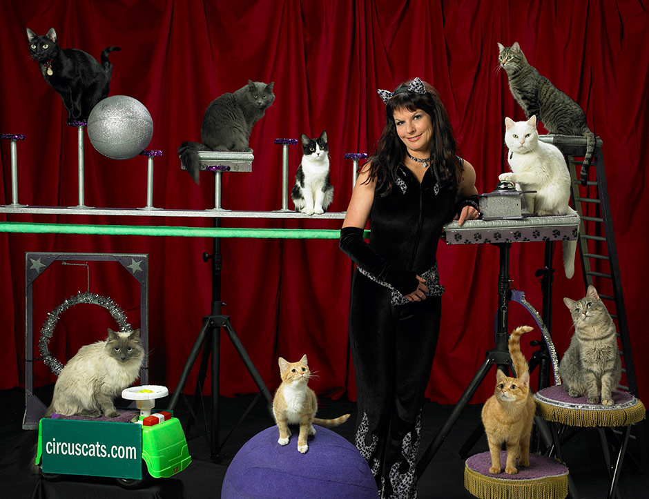Acro-Cats Circus Cats