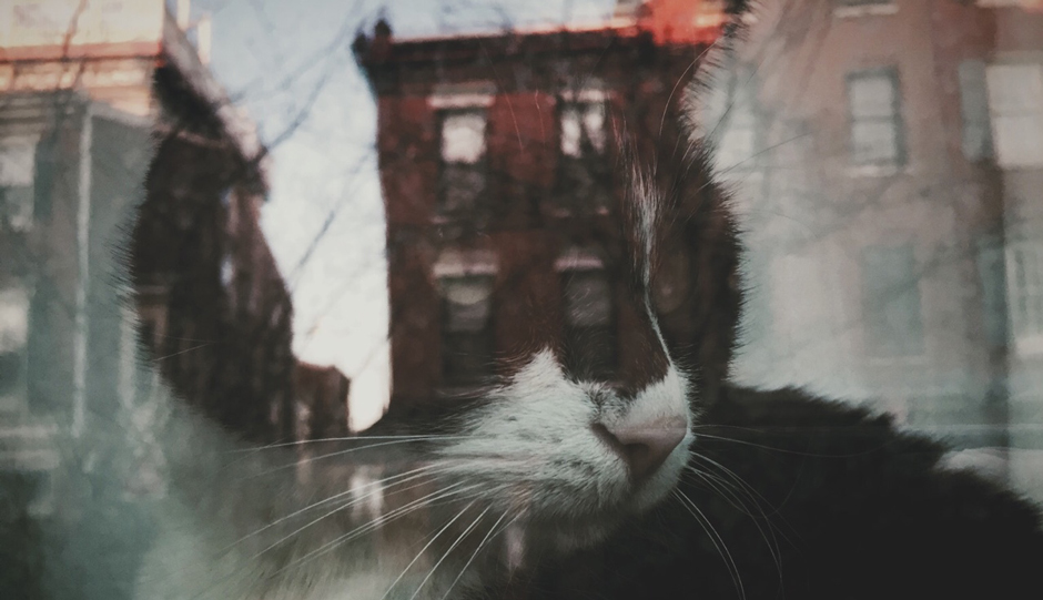 Queen Village Window Cat. Photo by Jackie Palmer,  hellowindowcat.tumblr.com